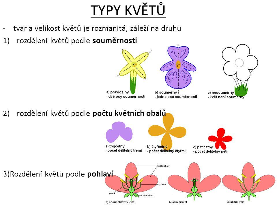 TYPY KVĚTŮ tvar a velikost květů je rozmanitá, záleží na druhu