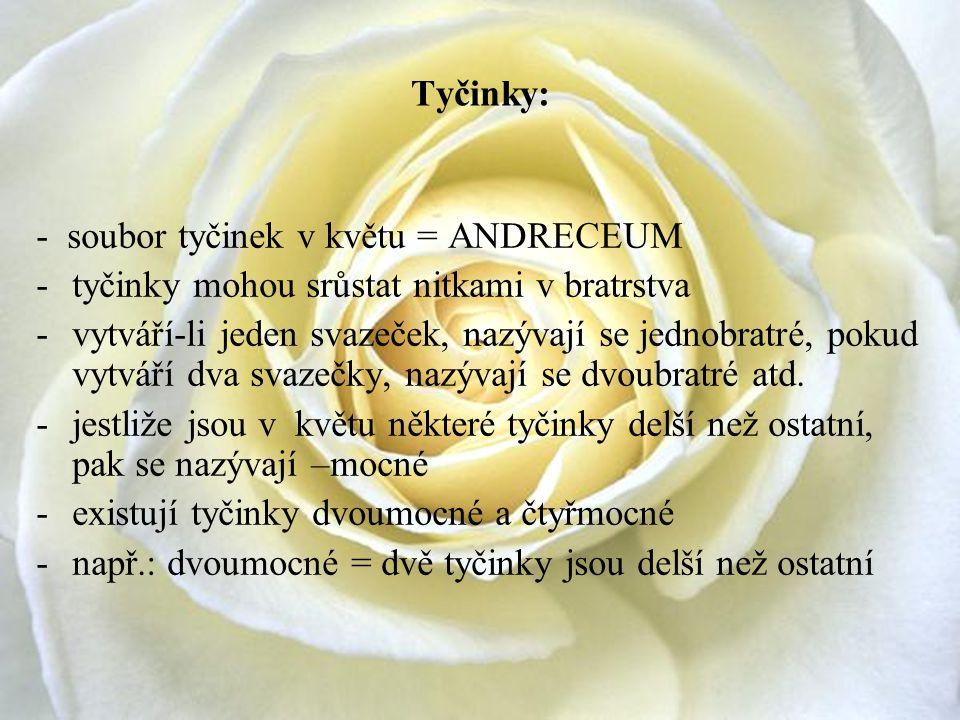 Tyčinky: - soubor tyčinek v květu = ANDRECEUM. tyčinky mohou srůstat nitkami v bratrstva.