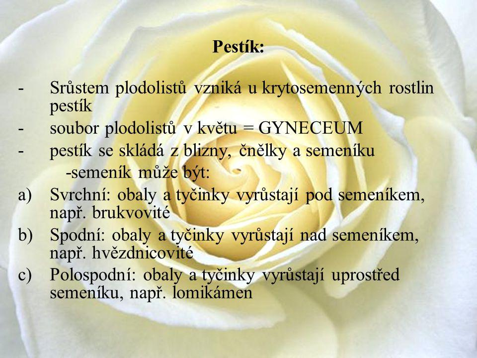 Pestík: Srůstem plodolistů vzniká u krytosemenných rostlin pestík. soubor plodolistů v květu = GYNECEUM.
