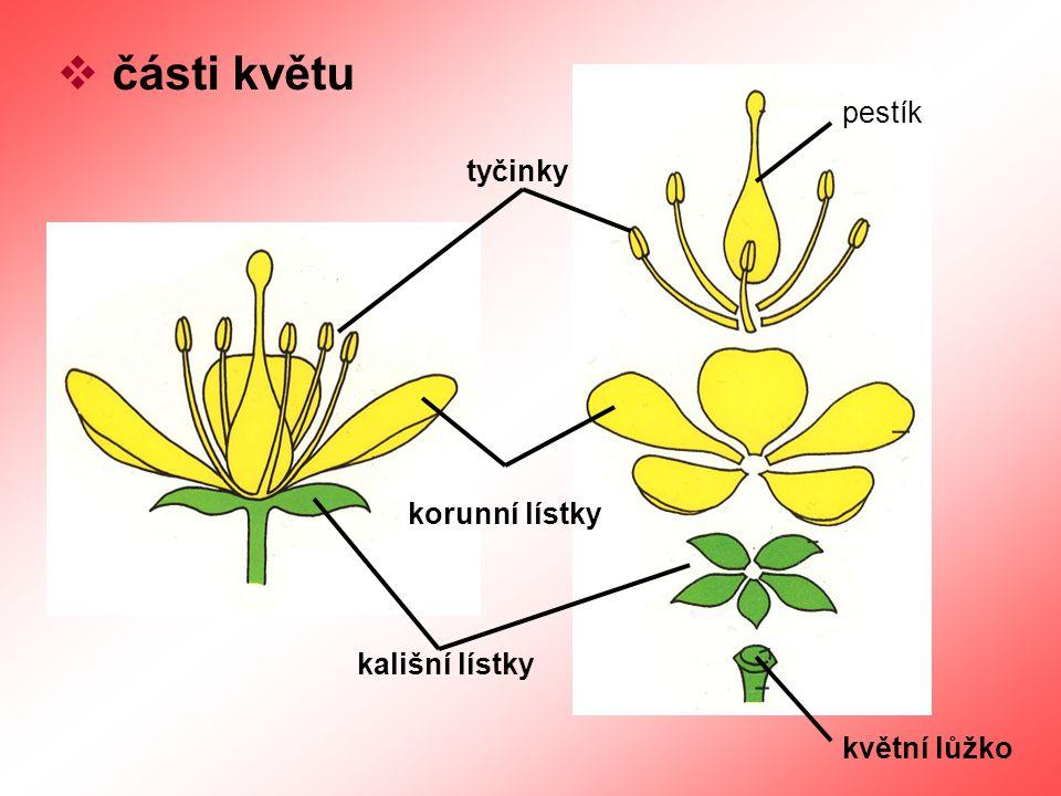 části květu pestík tyčinky korunní lístky kališní lístky květní lůžko