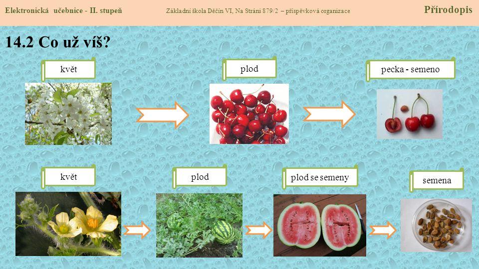 14.2 Co už víš květ plod pecka - semeno květ plod plod se semeny