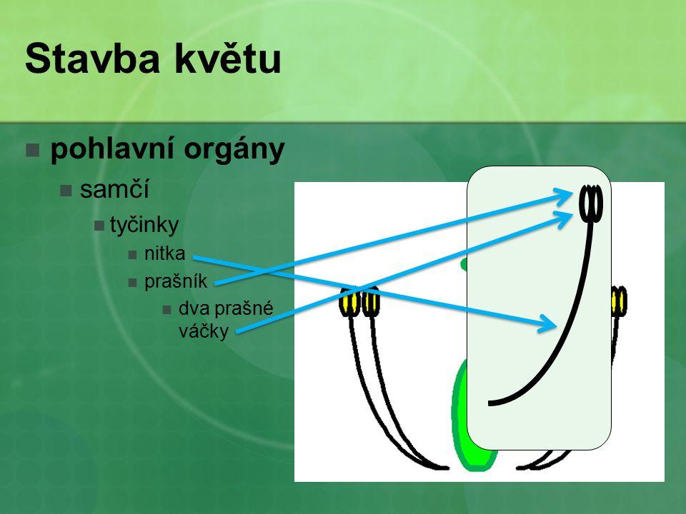 Stavba květu pohlavní orgány samčí tyčinky nitka prašník