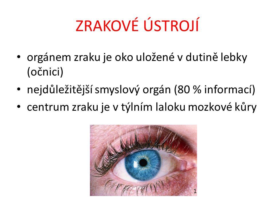 ZRAKOVÉ ÚSTROJÍ orgánem zraku je oko uložené v dutině lebky (očnici)