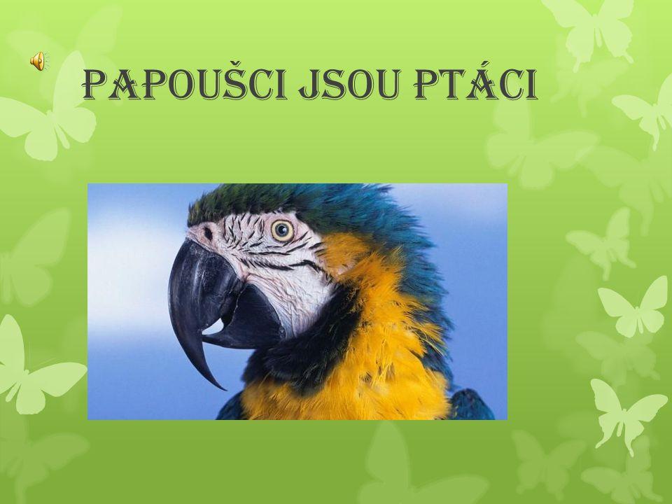 Papoušci jsou Ptáci