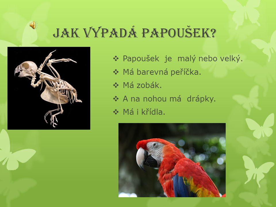 JAK VYPADÁ PAPOUŠEK Papoušek je malý nebo velký. Má barevná peříčka.