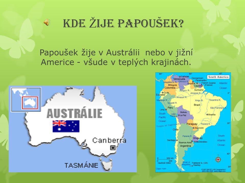KDE ŽIJE PAPOUŠEK Papoušek žije v Austrálii nebo v jižní Americe - všude v teplých krajinách.