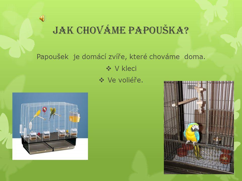 Papoušek je domácí zvíře, které chováme doma.