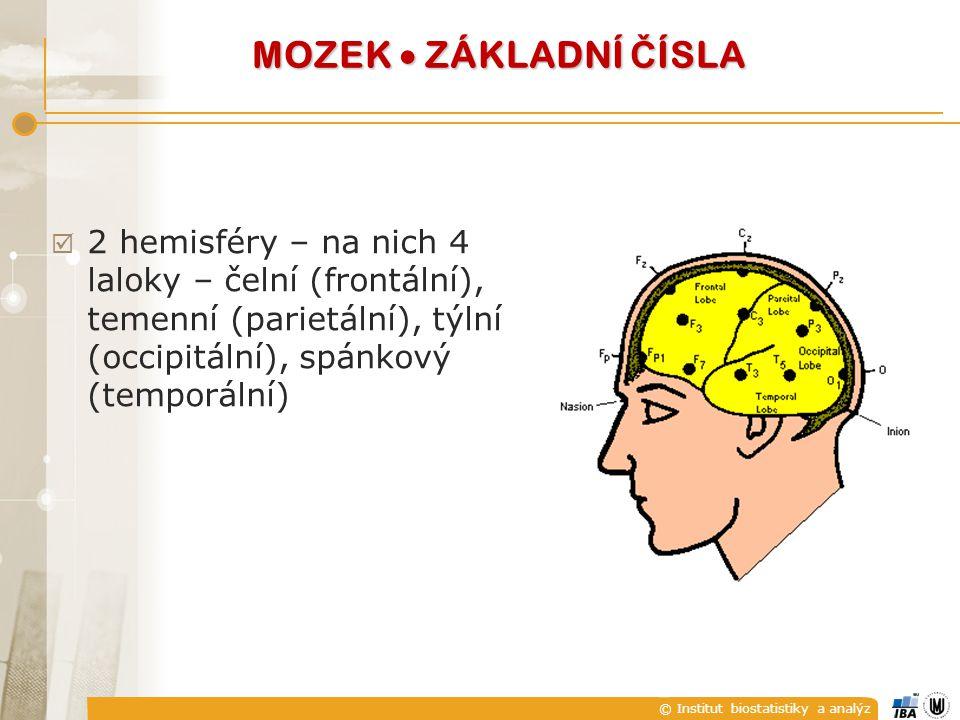 MOZEK  ZÁKLADNÍ ČÍSLA 2 hemisféry – na nich 4 laloky – čelní (frontální), temenní (parietální), týlní (occipitální), spánkový (temporální)