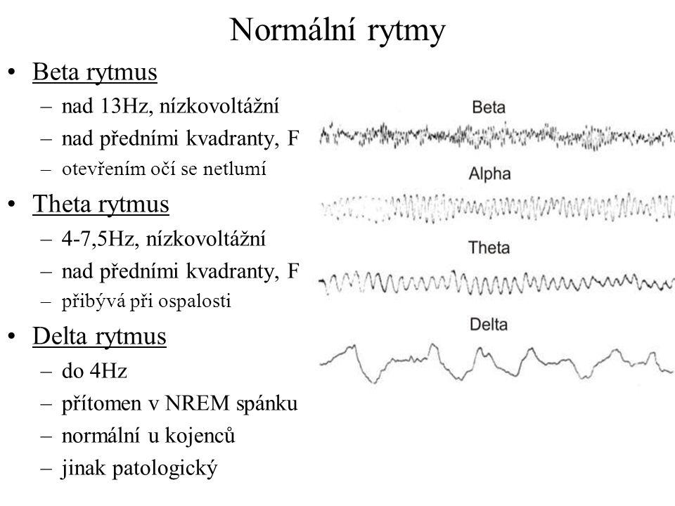Normální rytmy Beta rytmus Theta rytmus Delta rytmus