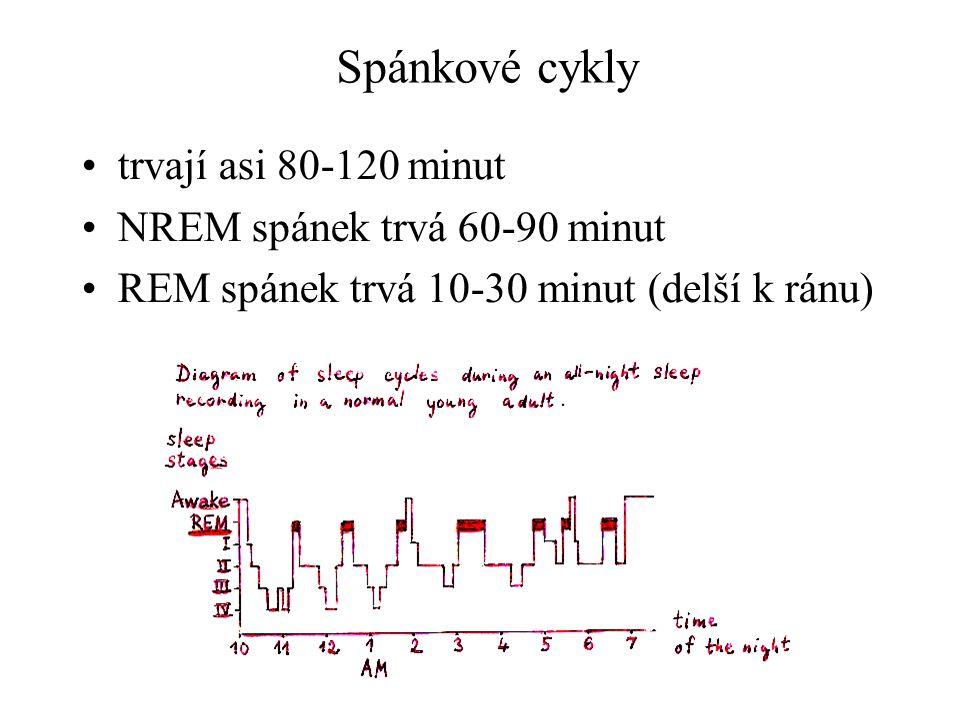 Spánkové cykly trvají asi 80-120 minut NREM spánek trvá 60-90 minut