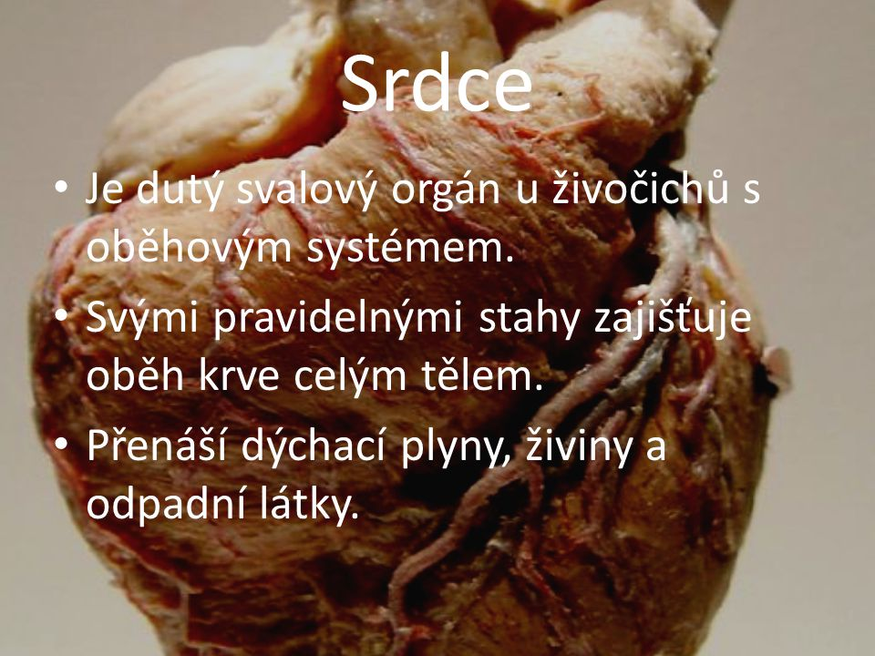 Srdce Je dutý svalový orgán u živočichů s oběhovým systémem.