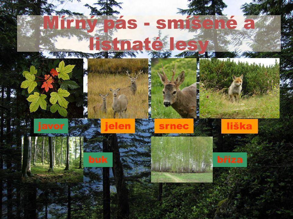 Mírný pás - smíšené a listnaté lesy