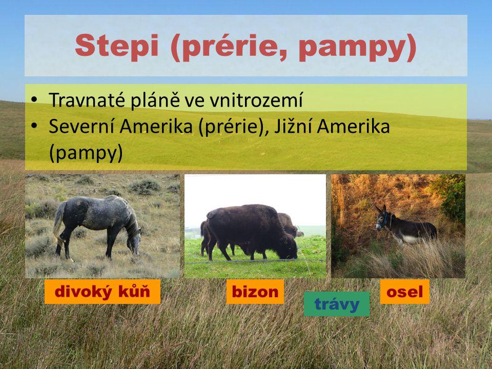 Stepi (prérie, pampy) Travnaté pláně ve vnitrozemí