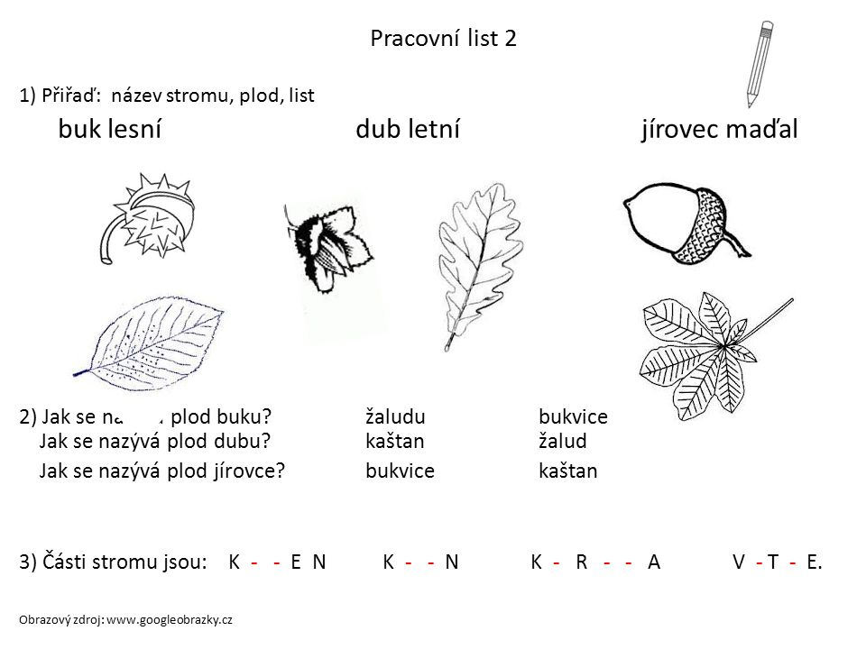 buk lesní dub letní jírovec maďal