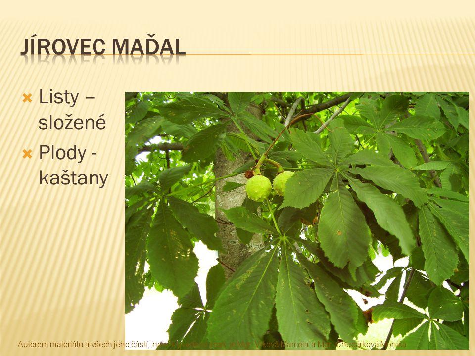 Jírovec maďal Listy – složené Plody - kaštany