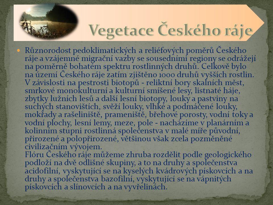 Vegetace Českého ráje