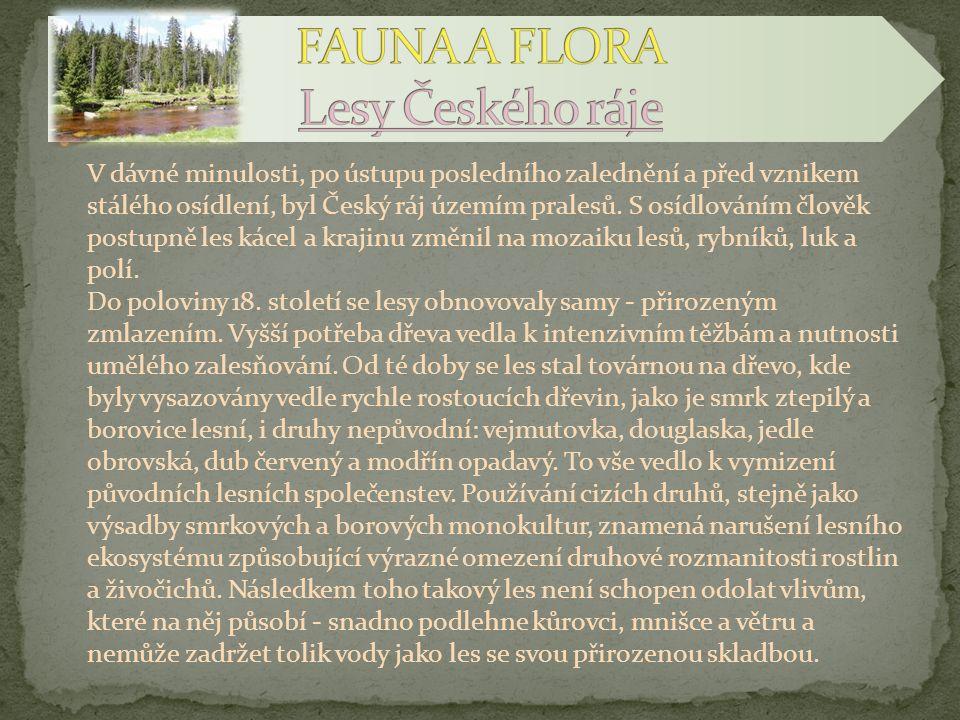 FAUNA A FLORA Lesy Českého ráje