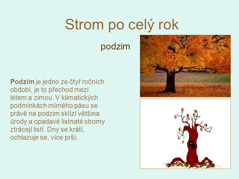 Strom po celý rok podzim