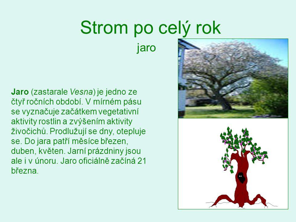 Strom po celý rok jaro.
