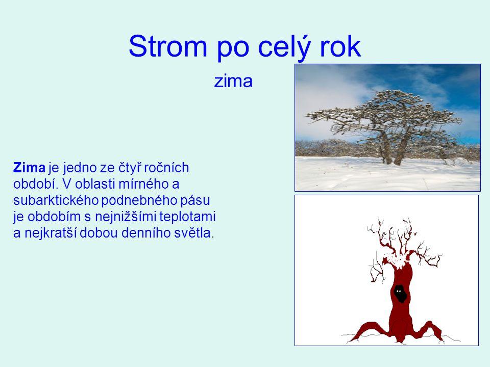 Strom po celý rok zima.