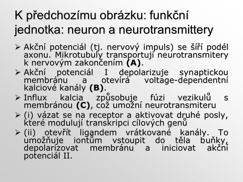 K předchozímu obrázku: funkční jednotka: neuron a neurotransmittery