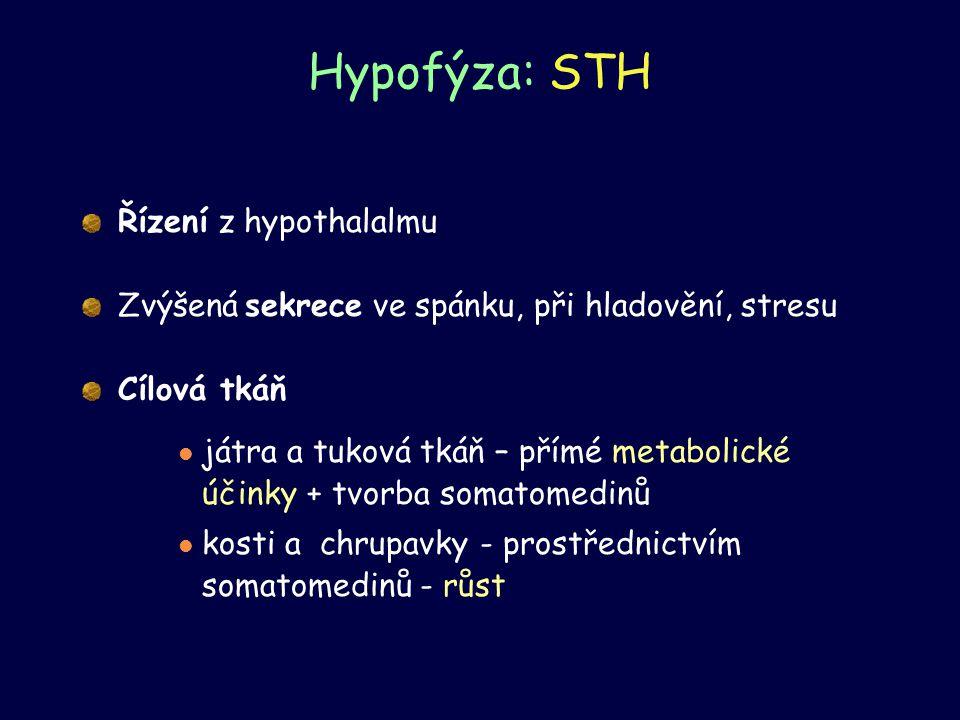 Hypofýza: STH Řízení z hypothalalmu