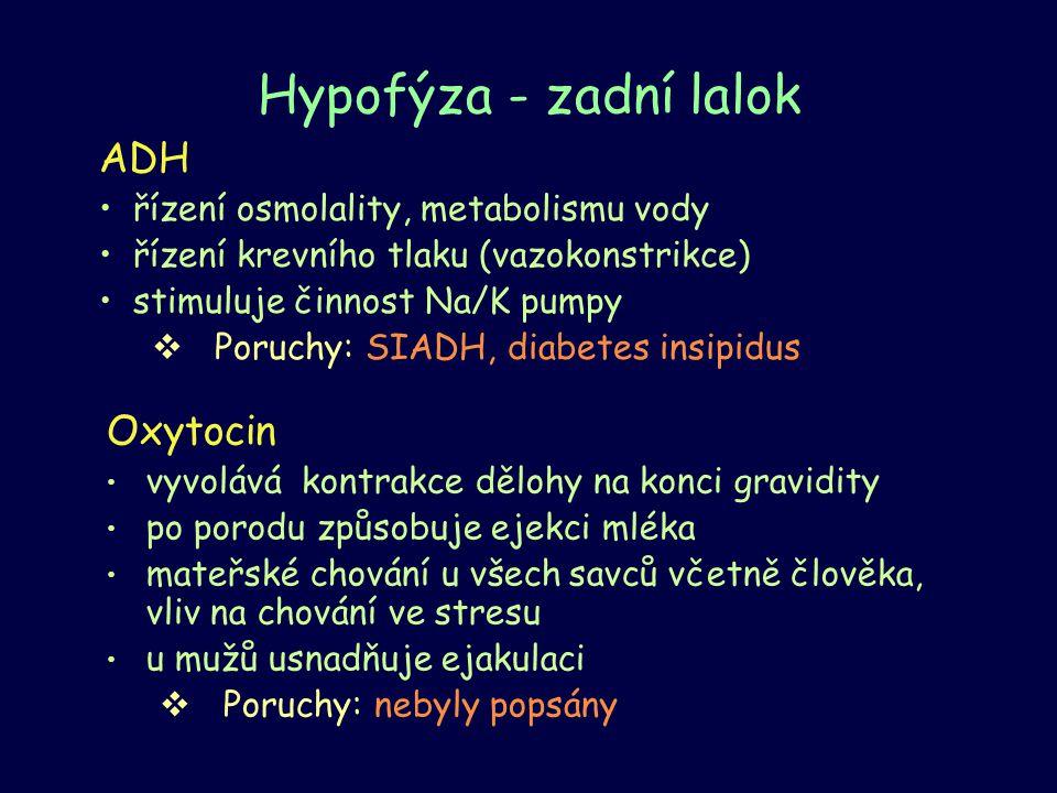 Hypofýza - zadní lalok ADH Oxytocin