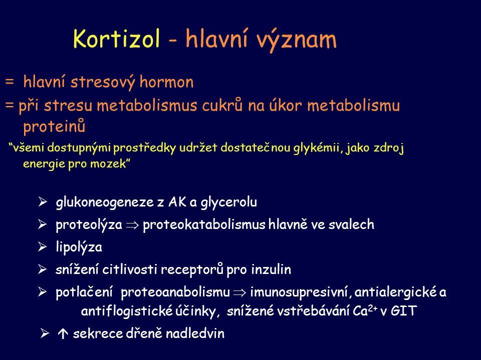 Kortizol - hlavní význam