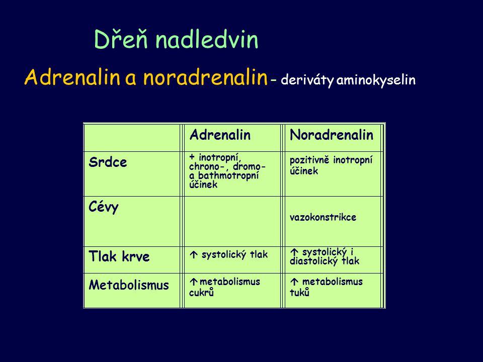 Dřeň nadledvin Adrenalin a noradrenalin – deriváty aminokyselin