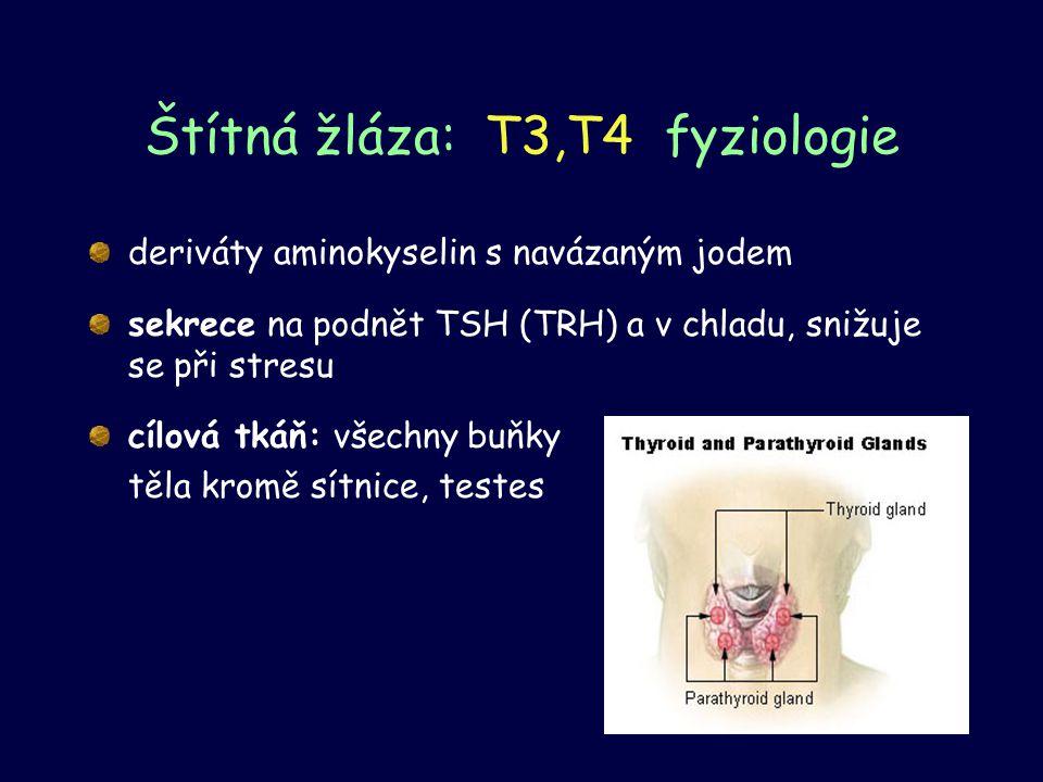 Štítná žláza: T3,T4 fyziologie