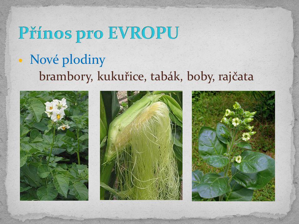 Přínos pro EVROPU brambory, kukuřice, tabák, boby, rajčata