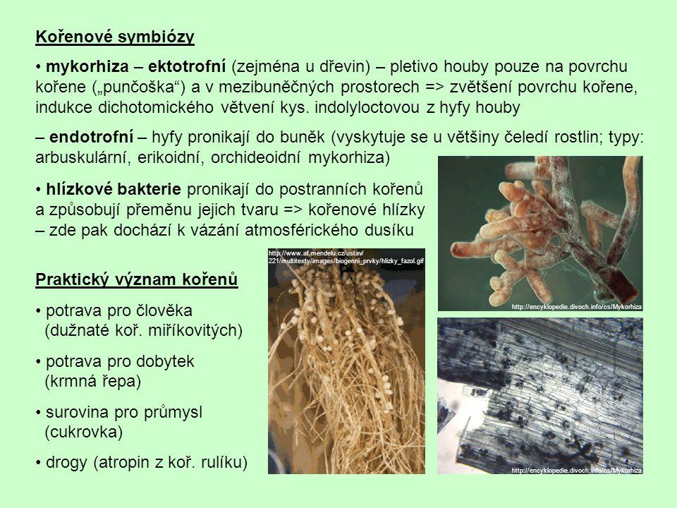 Praktický význam kořenů