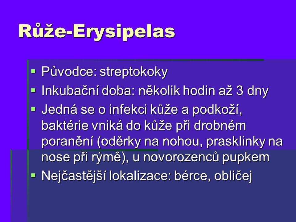 Růže-Erysipelas Původce: streptokoky