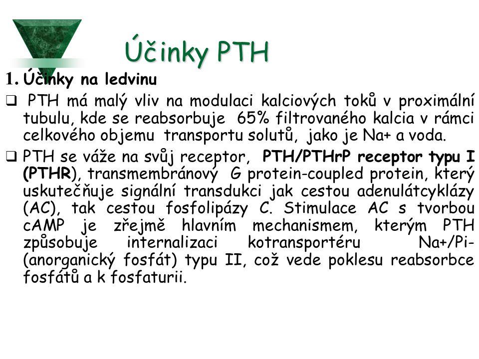 Účinky PTH 1. Účinky na ledvinu