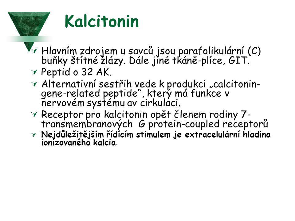 Kalcitonin Hlavním zdrojem u savců jsou parafolikulární (C) buňky štítné žlázy. Dále jiné tkáně-plíce, GIT.