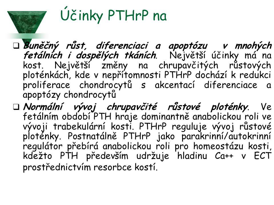 Účinky PTHrP na