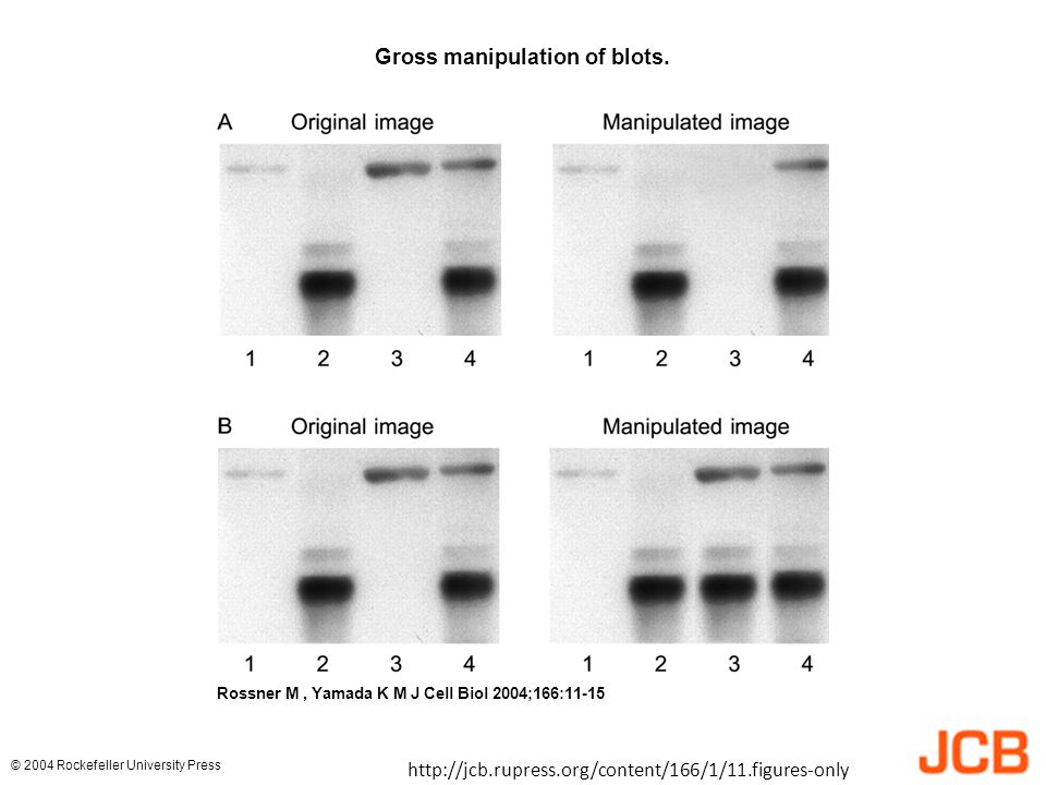 Gross manipulation of blots.