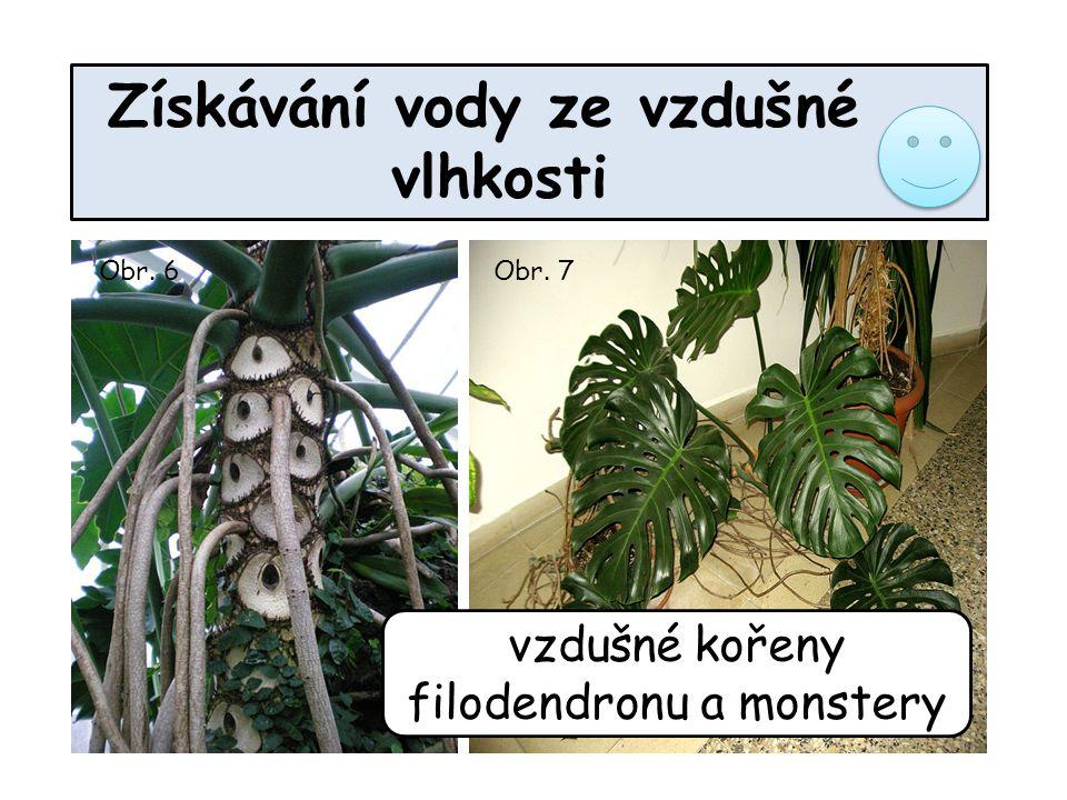 vzdušné kořeny filodendronu a monstery