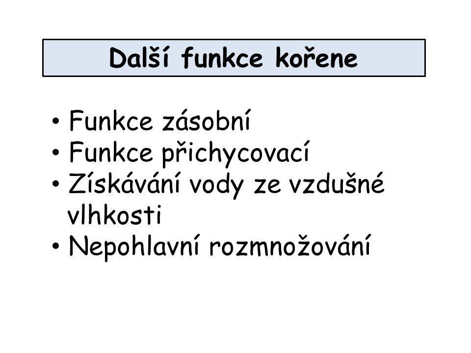 Další funkce kořene Funkce zásobní. Funkce přichycovací.
