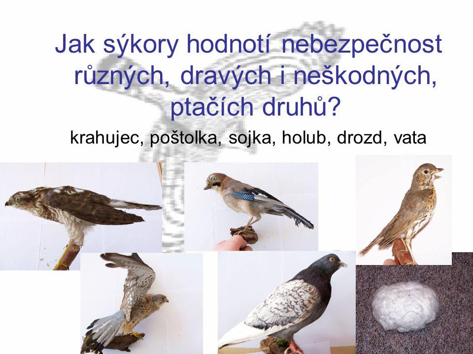 krahujec, poštolka, sojka, holub, drozd, vata
