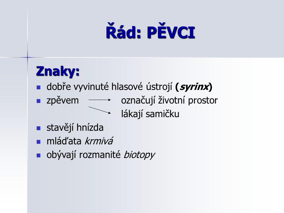 Řád: PĚVCI Znaky: dobře vyvinuté hlasové ústrojí (syrinx)