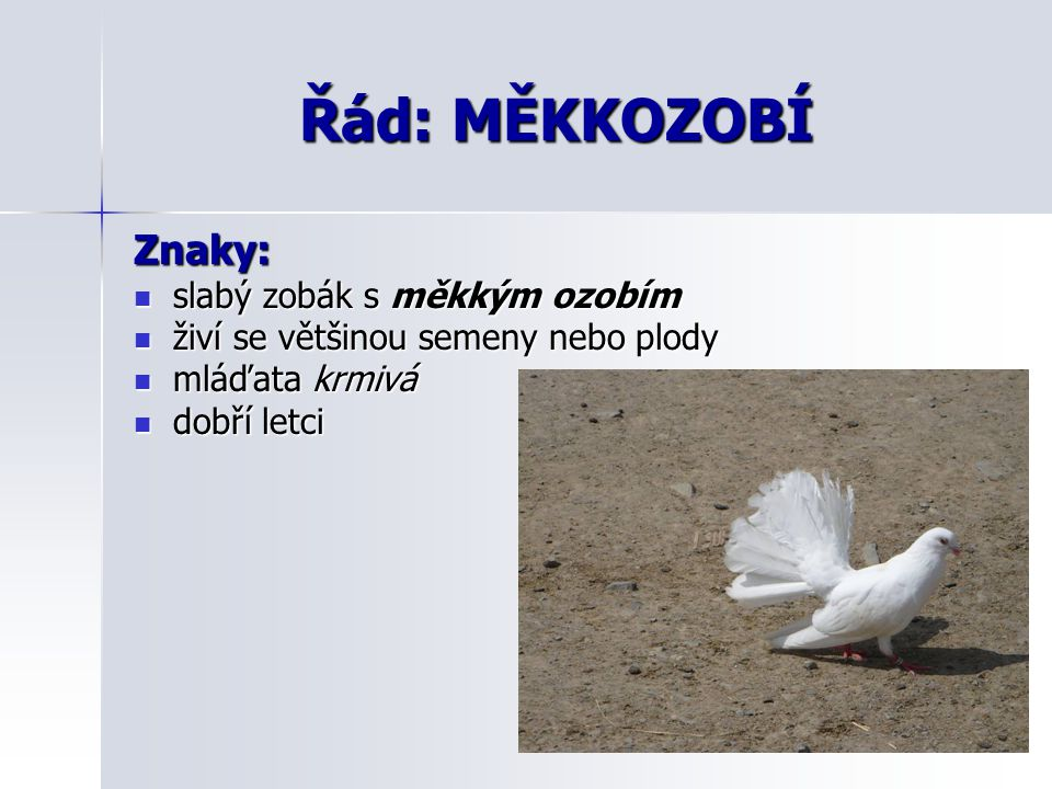 Řád: MĚKKOZOBÍ Znaky: slabý zobák s měkkým ozobím