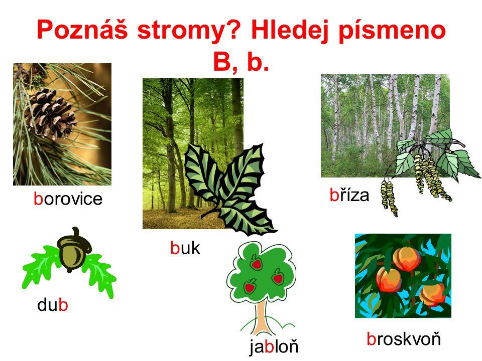 Poznáš stromy Hledej písmeno B, b.