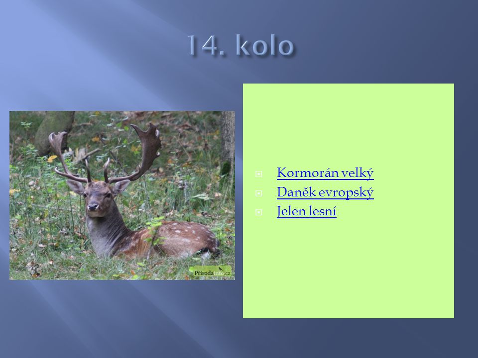 14. kolo Kormorán velký Daněk evropský Jelen lesní