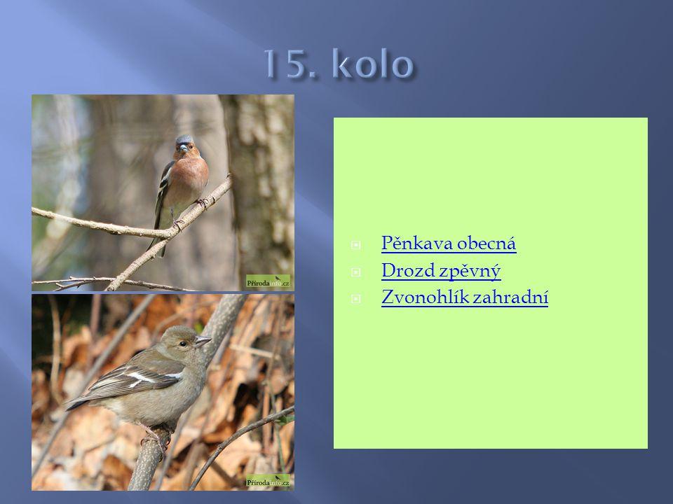 15. kolo Pěnkava obecná Drozd zpěvný Zvonohlík zahradní