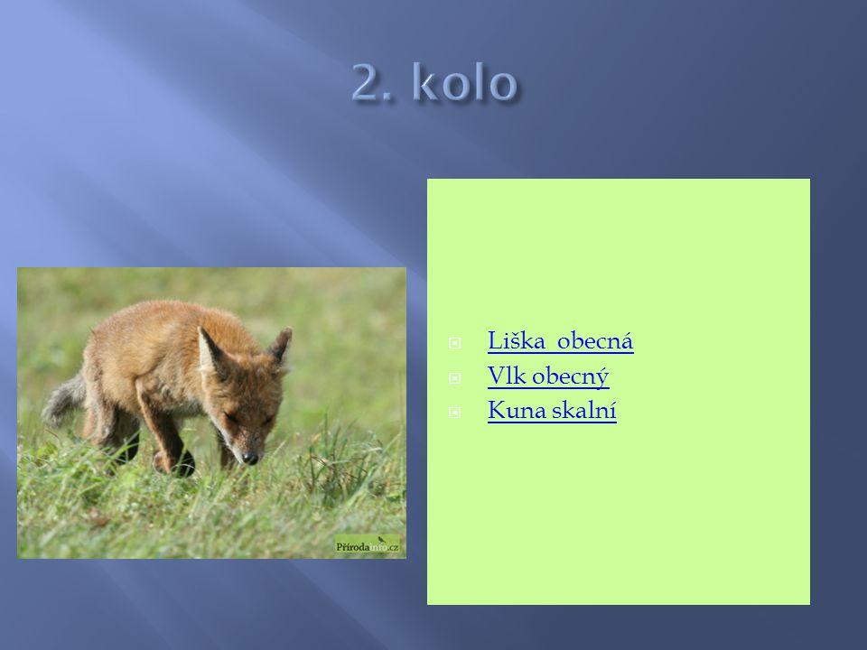 2. kolo Liška obecná Vlk obecný Kuna skalní