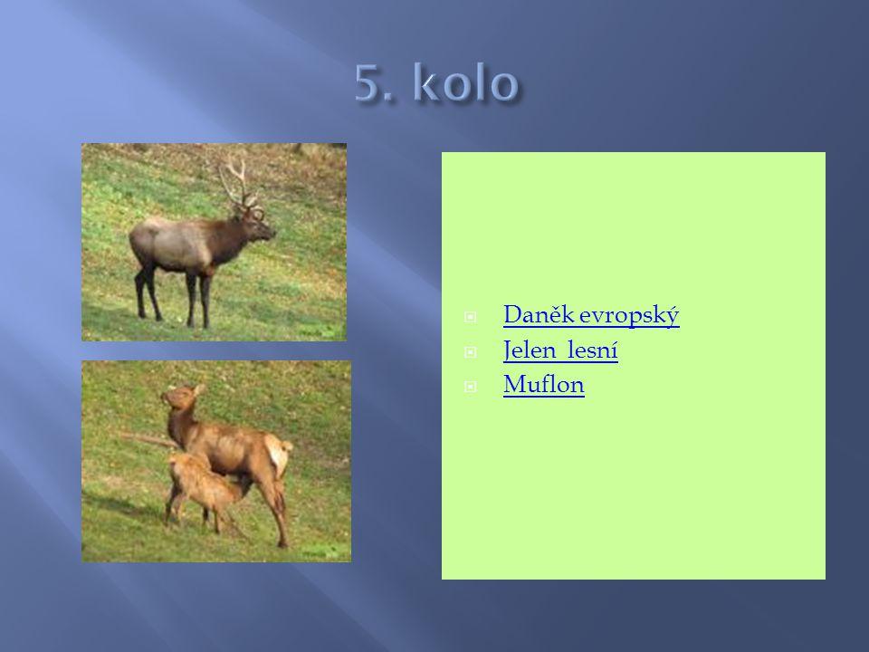5. kolo Daněk evropský Jelen lesní Muflon