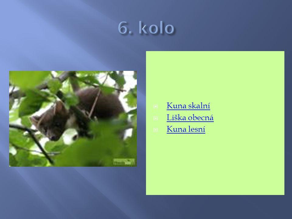 6. kolo Kuna skalní Liška obecná Kuna lesní