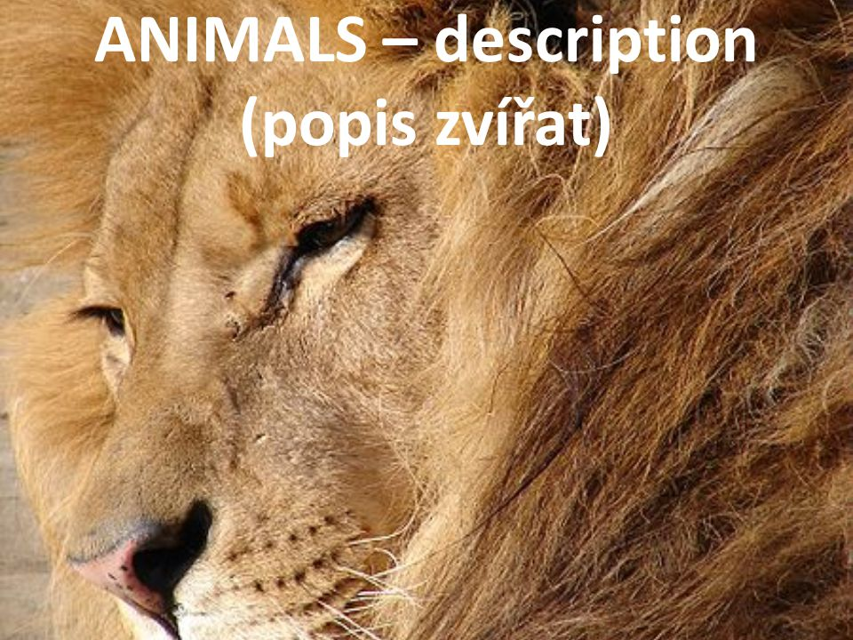 ANIMALS – description (popis zvířat)