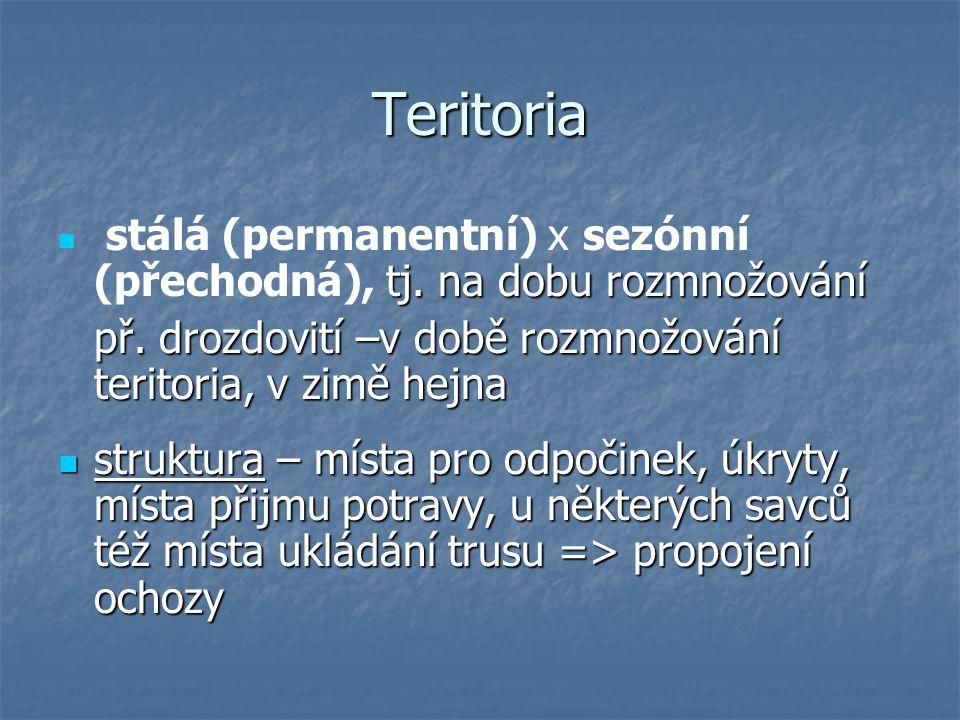 Teritoria př. drozdovití –v době rozmnožování teritoria, v zimě hejna